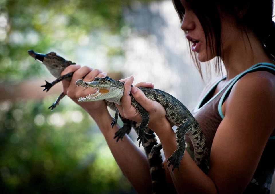Miami To Everglades Eco Tour Adventure