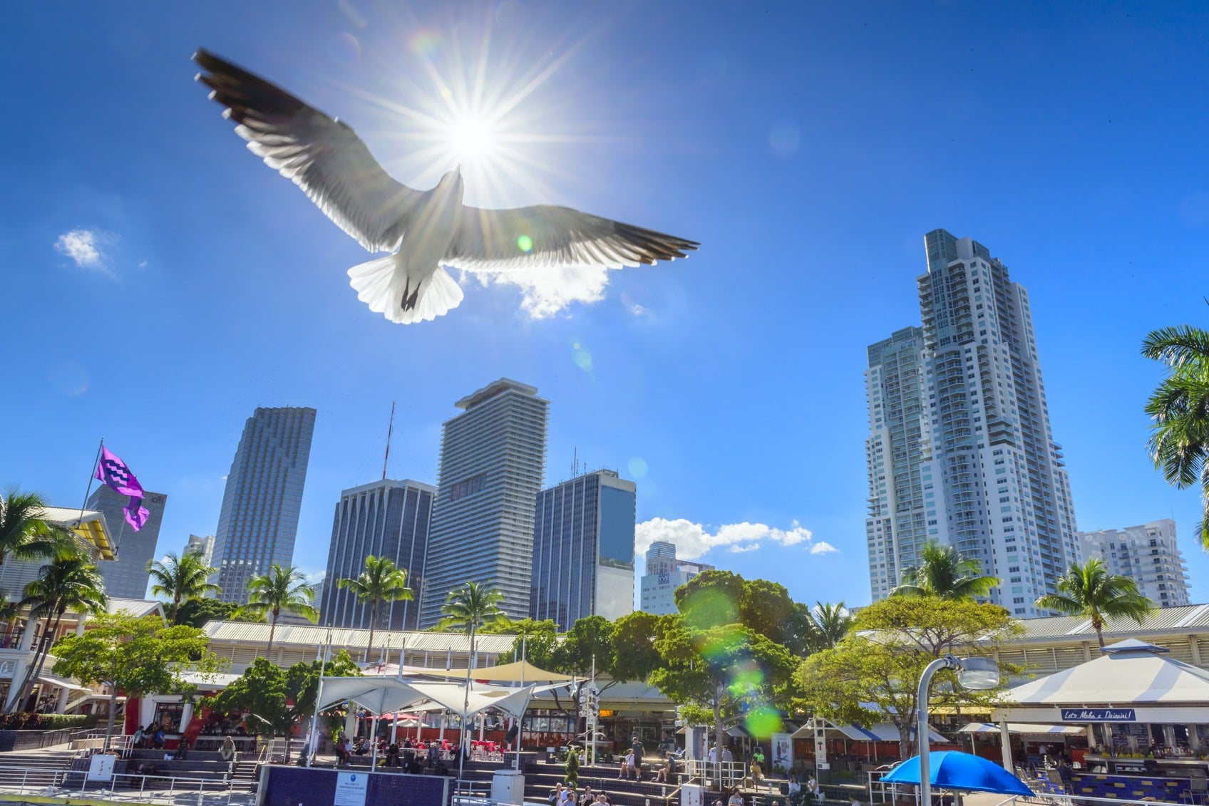 Top Miami Tours, Tickets & Activities