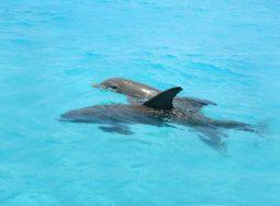 Key West Dolphin Snorkel Safari