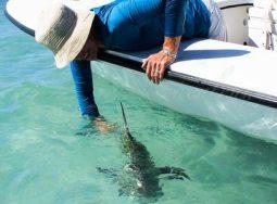 Key West Flats Fishing Charter